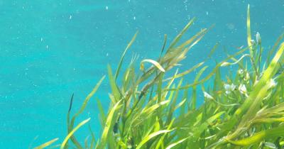 Alge marine pentru ten beneficii